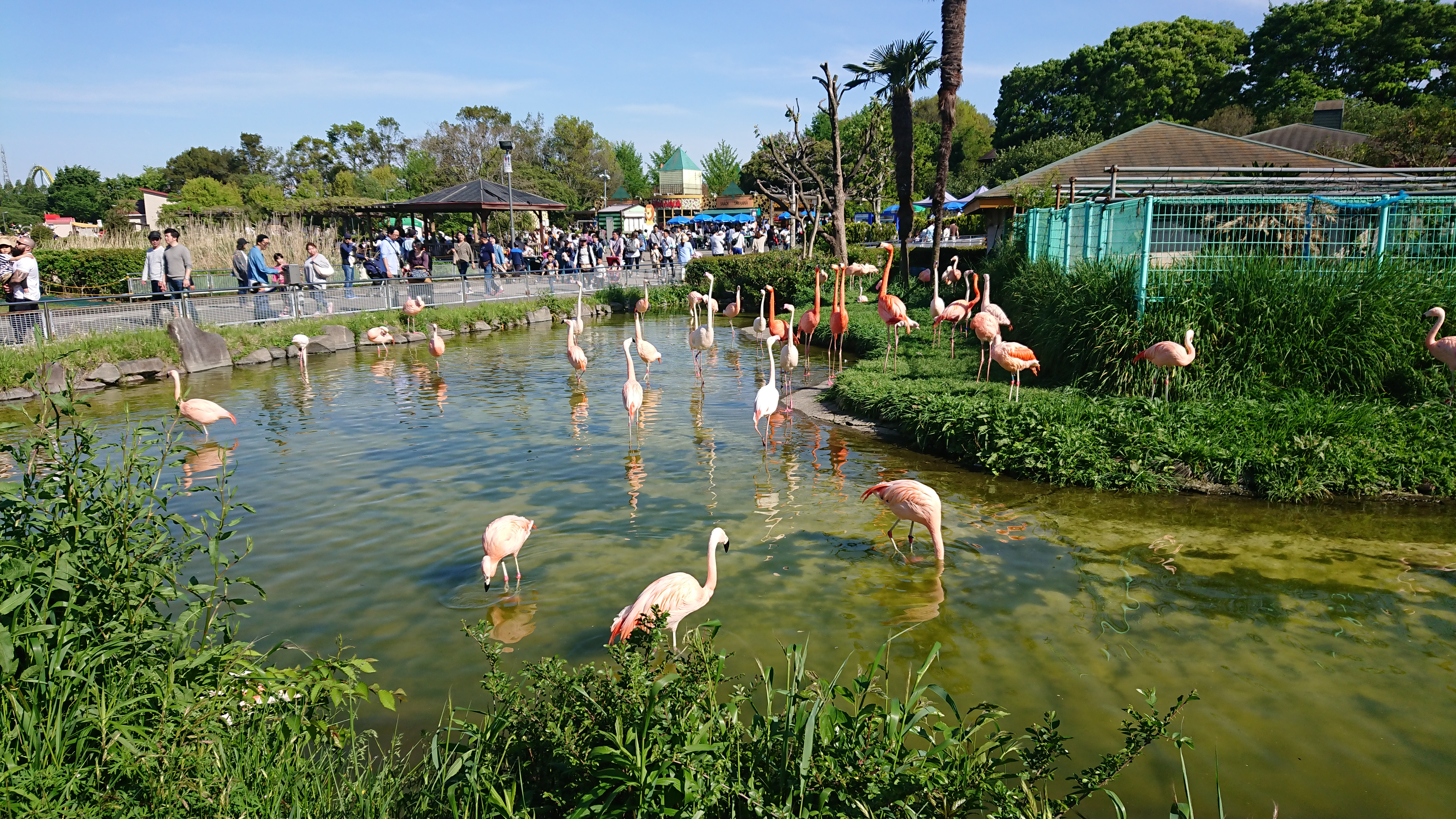 東武動物公園に行ってみた!GWの混み具合は!?