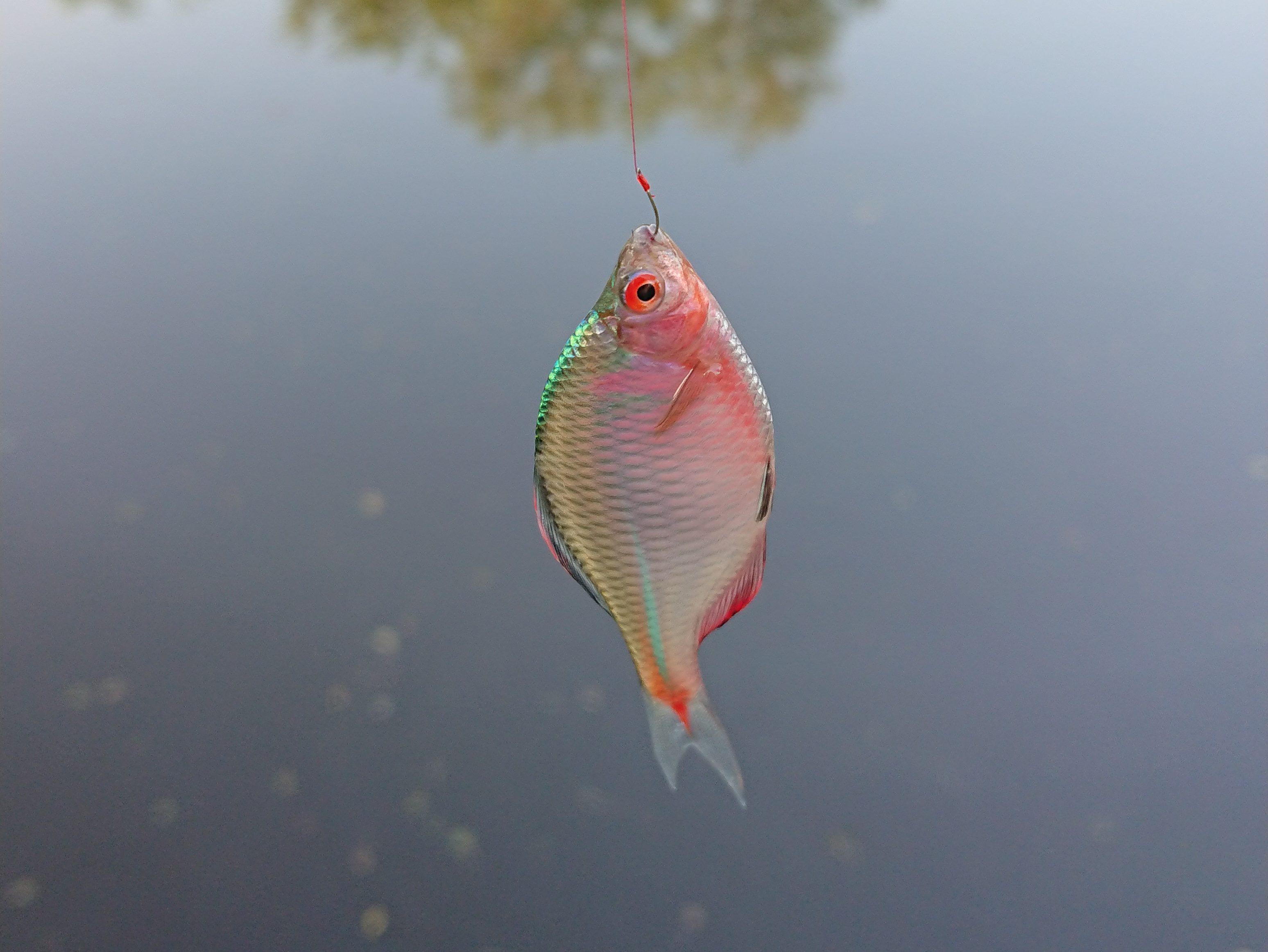 「ミニ釣り」の魅力を紹介!初心者でも簡単に小魚が釣れます♪